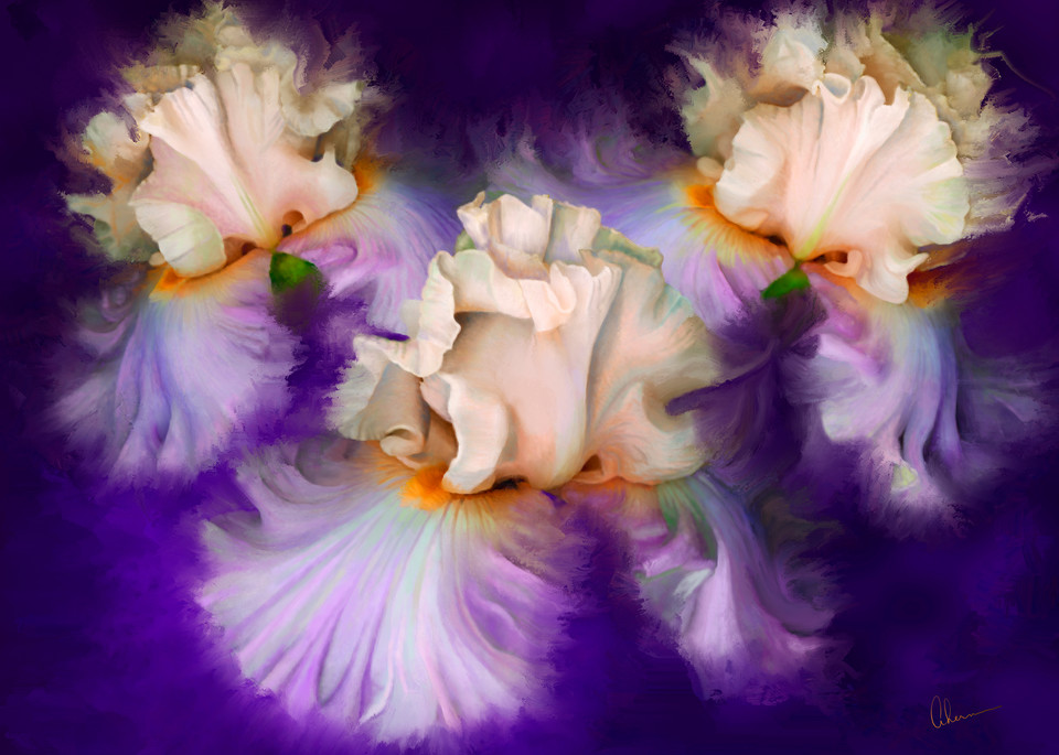 Dancing Iris Trio, wall art. A print of an original painting by the artist, Mary Ahern.