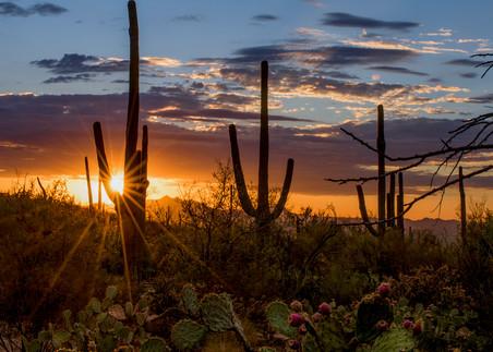Summer Sunset Panoramic