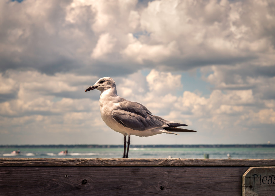 Please Don't Feed the Birds | Susan J Photography
