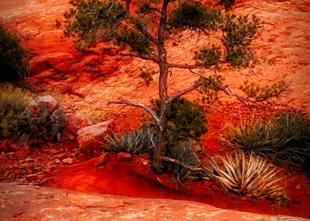 Sedona 2010 2 49 Photography Art   Images2Impact