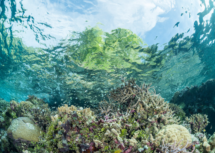 Coral Reef Trees & Clouds, Solomon Islands