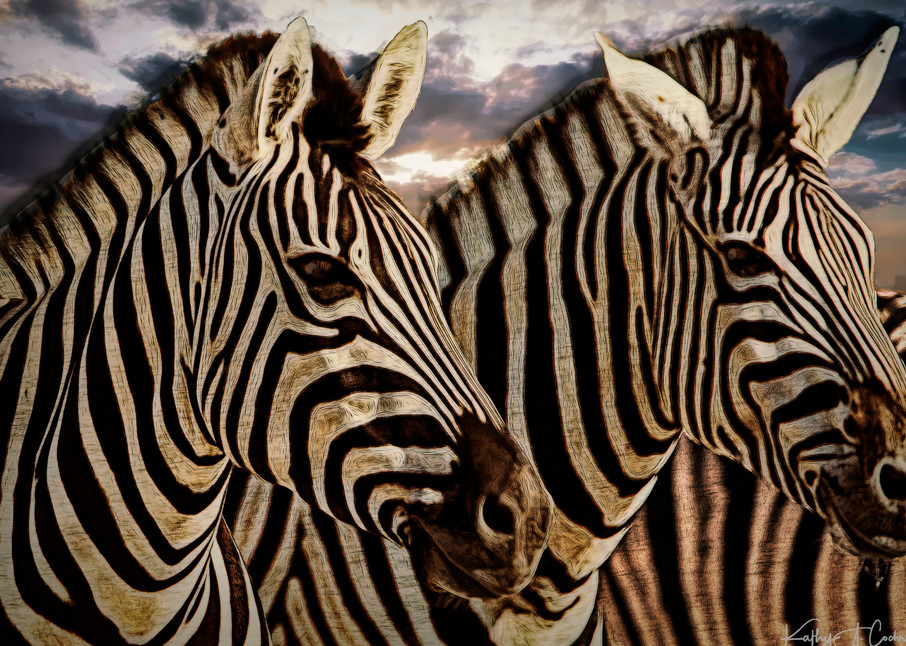 Zebra Twosome Photography Art | Images2Impact