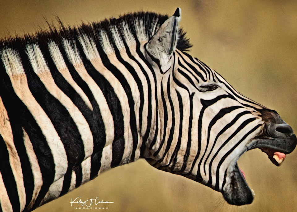 Zebra Yawn Photography Art | Images2Impact
