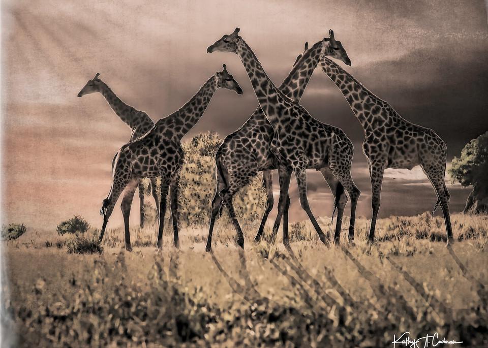 Gathering Photography Art | Images2Impact