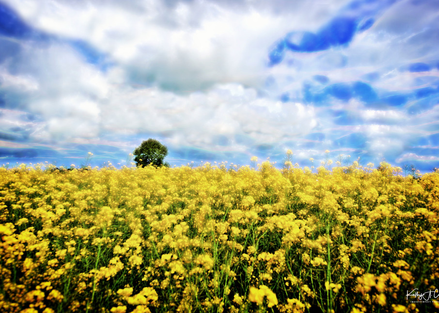 Clouds Over Canola  Photography Art   Images2Impact