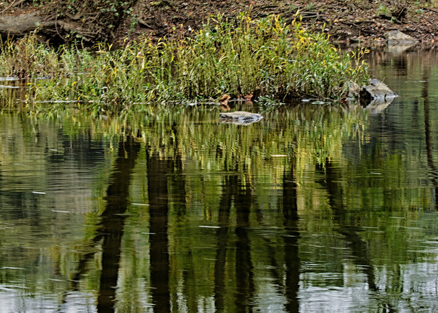A Fine Art Photograph Great Falls Reflections of C & O Canal by Michael Pucciarelli
