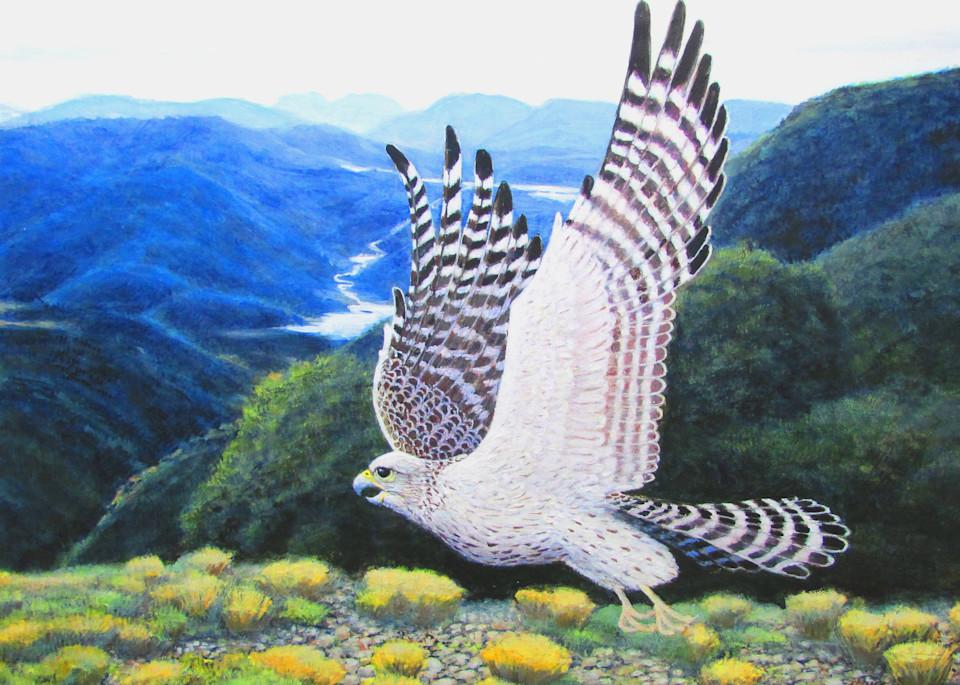 Grey Falcon In Flight Art   Charles Wallis