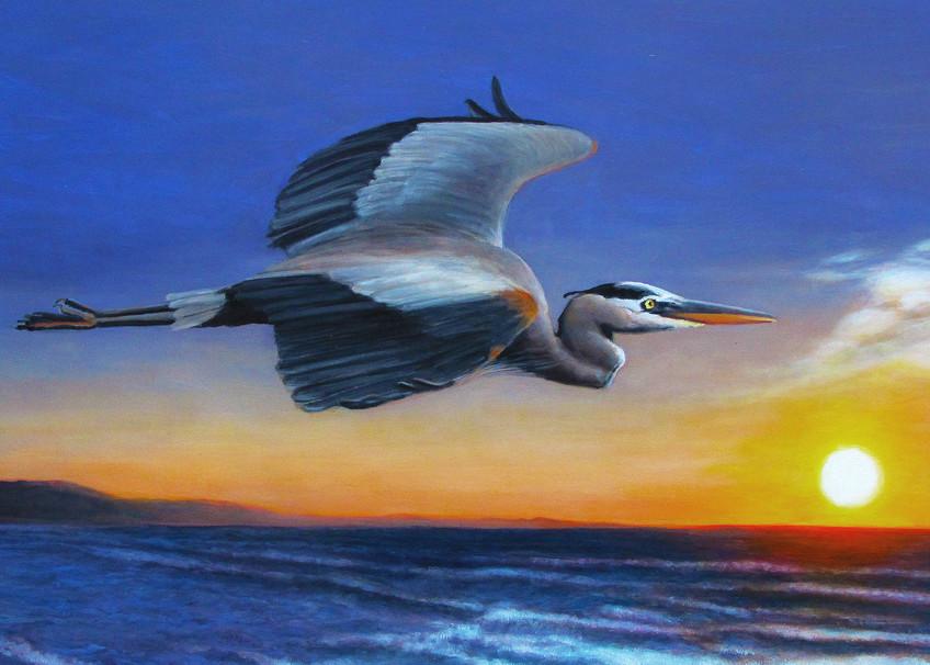 Great Blue Heron Sunrise Flight Art | Charles Wallis