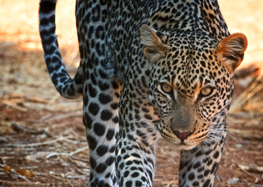On The Prowl Photography Art   Images2Impact