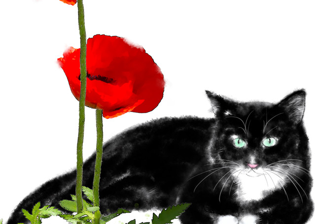 Cats 101 Photography Art | Cheng Yan Studio