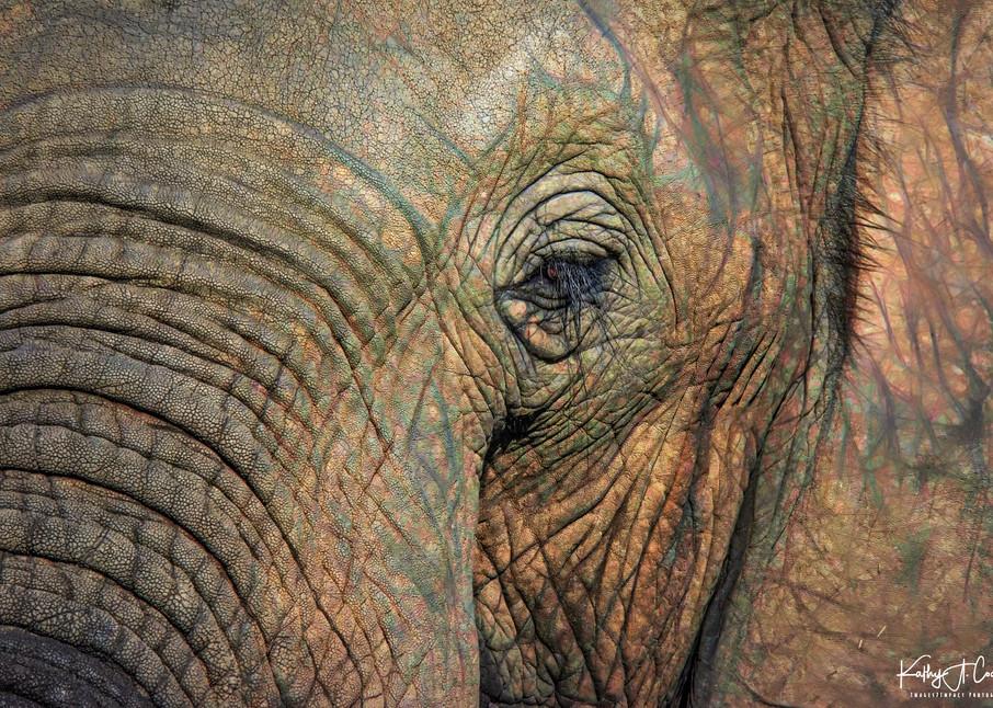 Macro Elephant Photography Art | Images2Impact
