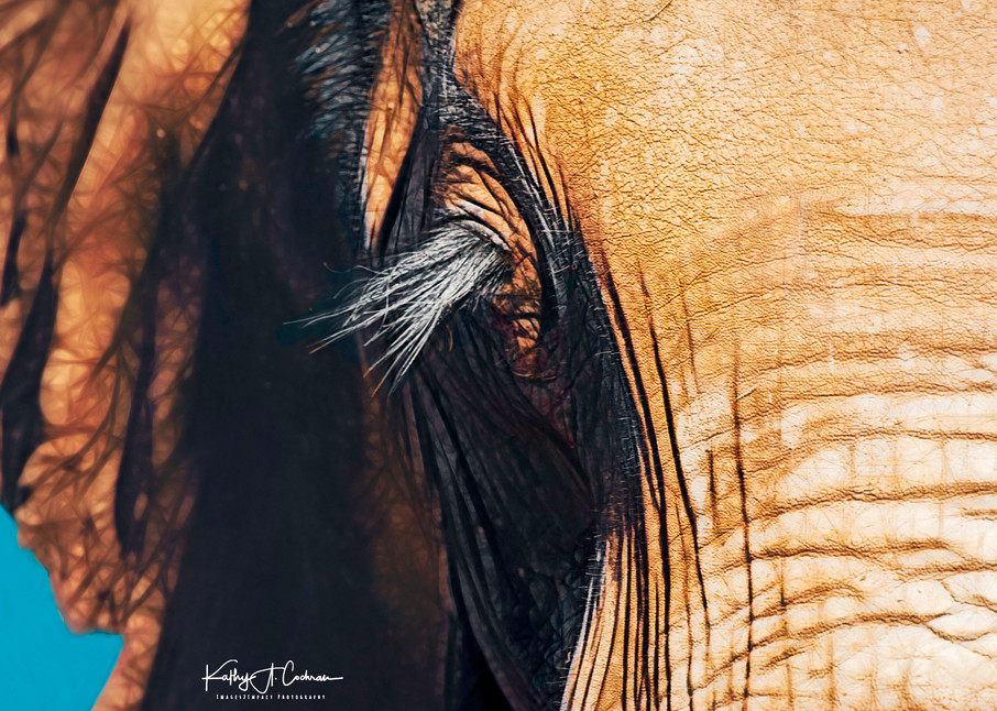 Elephant Lashes Photography Art | Images2Impact