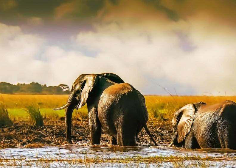Landfall Photography Art   Images2Impact