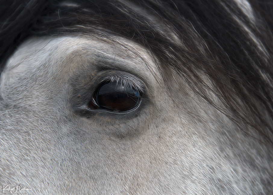 Eye Of The Horse 2 Photography Art | Images2Impact