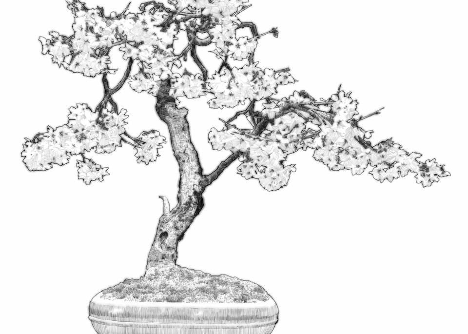 """Digital etching by Eric Wallis, inventor of the technique, titled, """"Bonsai Three."""""""