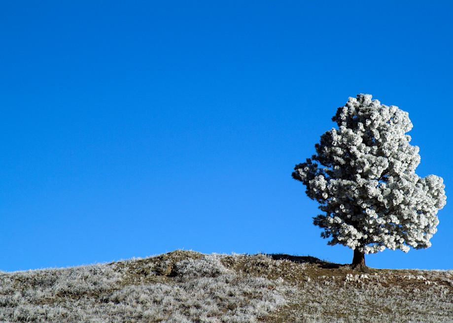 Lone Tree Photography Art | Craig Edwards Fine Art Images
