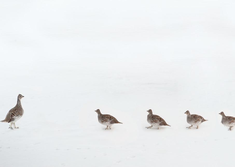 Pecking Order Photography Art | Craig Edwards Fine Art Images