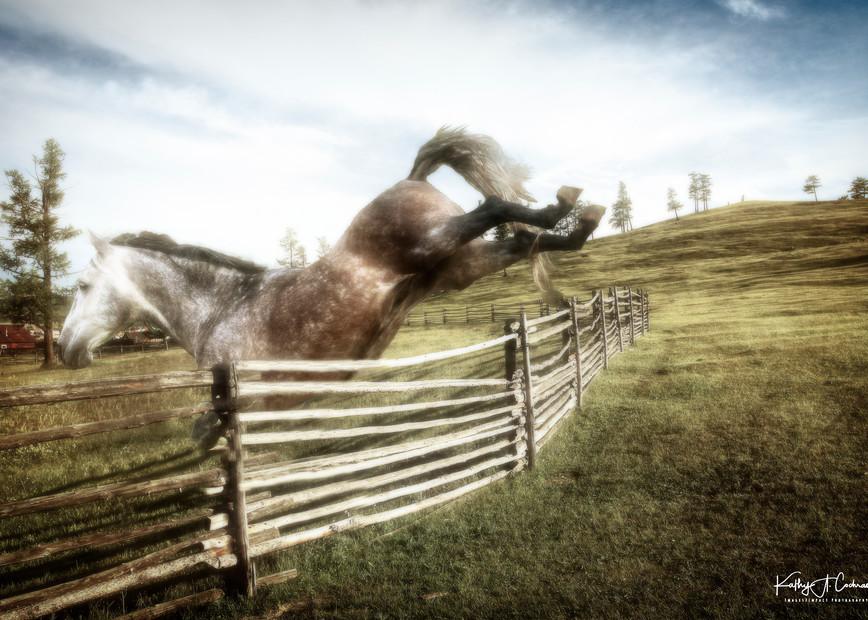 Joyful Jumping Photography Art | Images2Impact