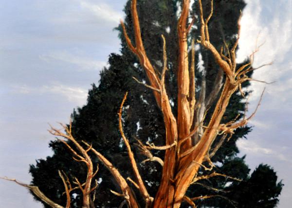 Generations Art | Cypress Cove Creations