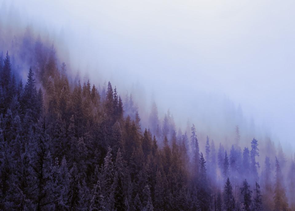 Wenatchee National Forest Art | James Alfred Friesen