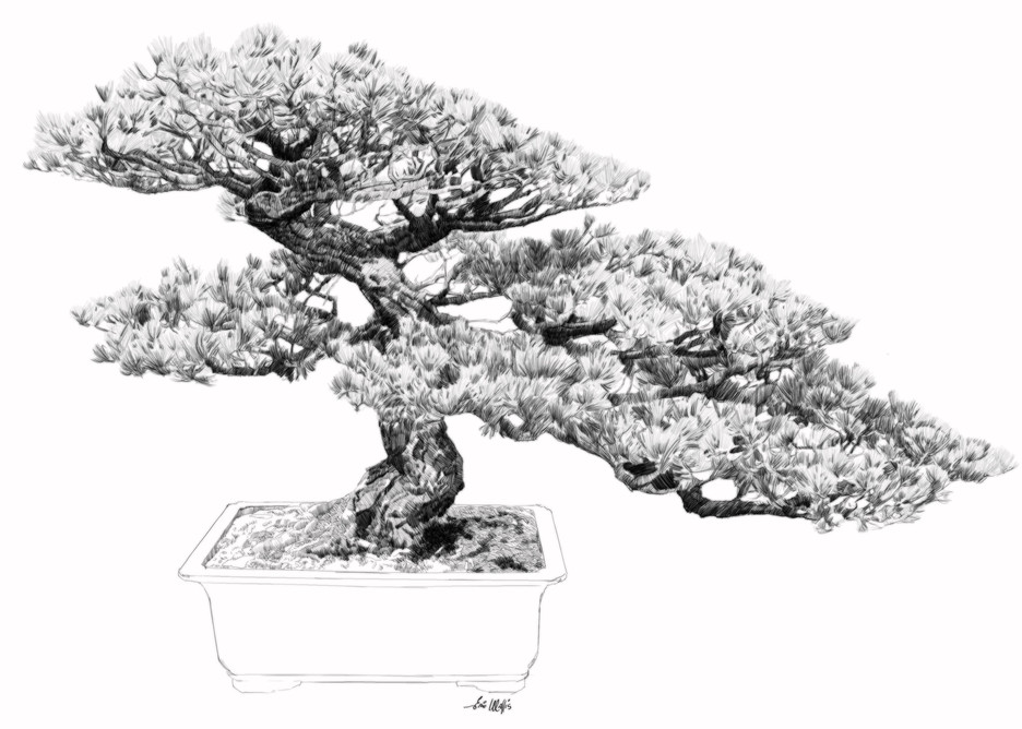 """Digital etching by Eric Wallis, inventor of the technique, titled, """"Bonsai Seven."""""""