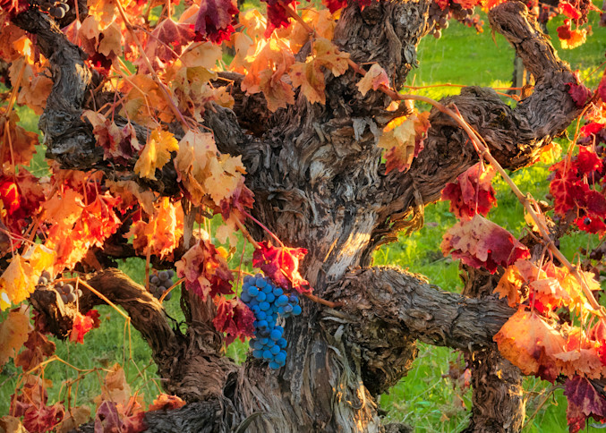 Autumn Harvest Napa Art | The Carmel Gallery