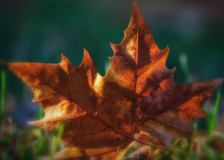 Leaves 2 5 Photography Art | Sandy Adams Outdoorvizions Photography