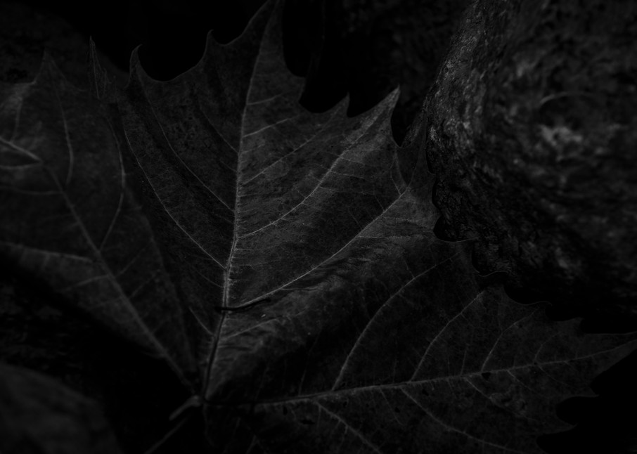 Leaves  5 Photography Art | Sandy Adams Outdoorvizions Photography