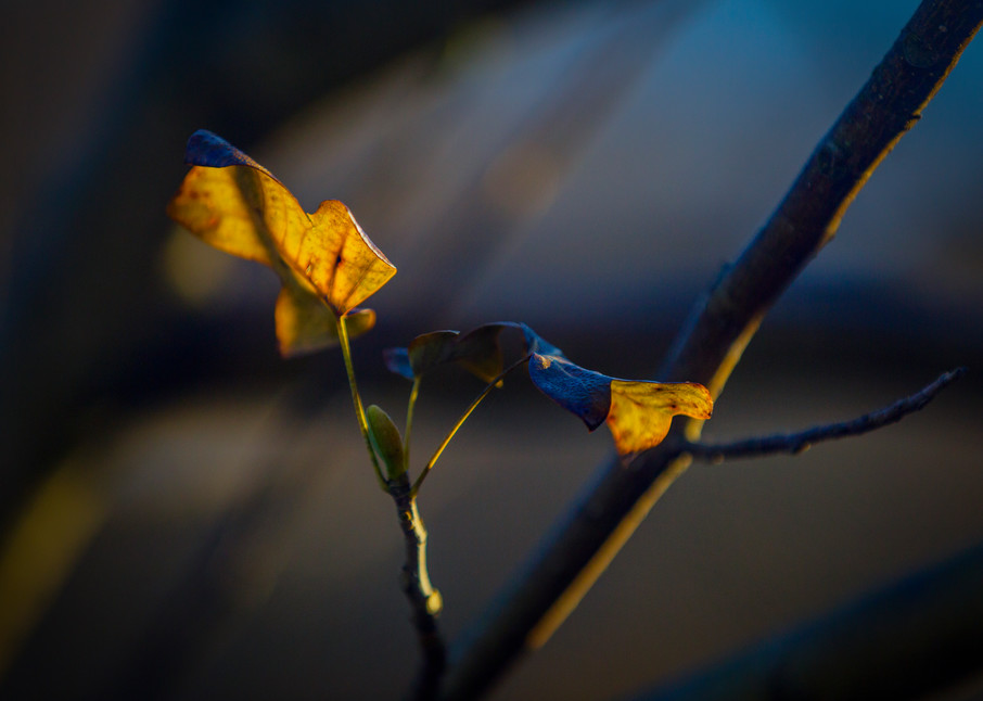 Leaves  13 Photography Art | Sandy Adams Outdoorvizions Photography