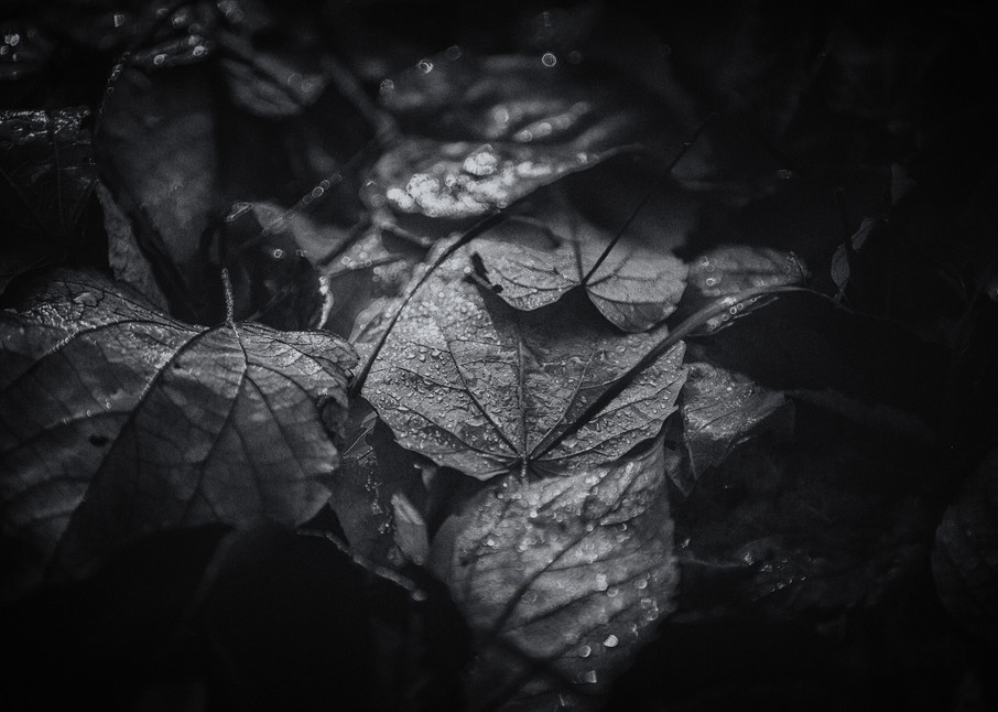 Leaves  15 Photography Art | Sandy Adams Outdoorvizions Photography