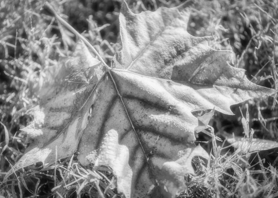 Leaves  67 Photography Art | Sandy Adams Outdoorvizions Photography