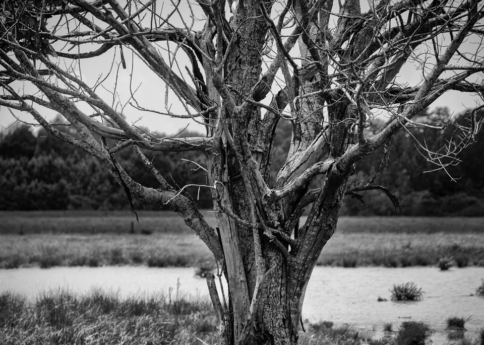 Trees  Photography Art | Sandy Adams Outdoorvizions Photography