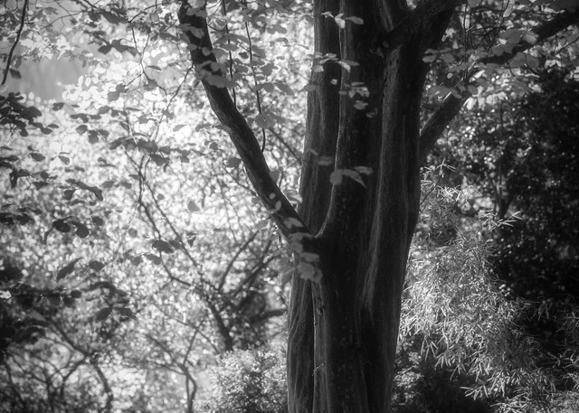 Trees  22 Photography Art | Sandy Adams Outdoorvizions Photography