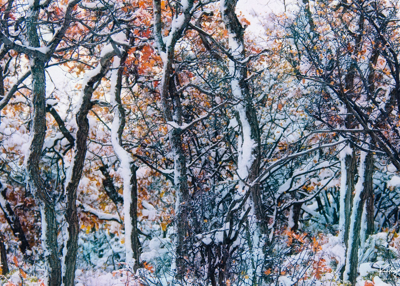 The Colors Of Winter Photography Art | Images2Impact