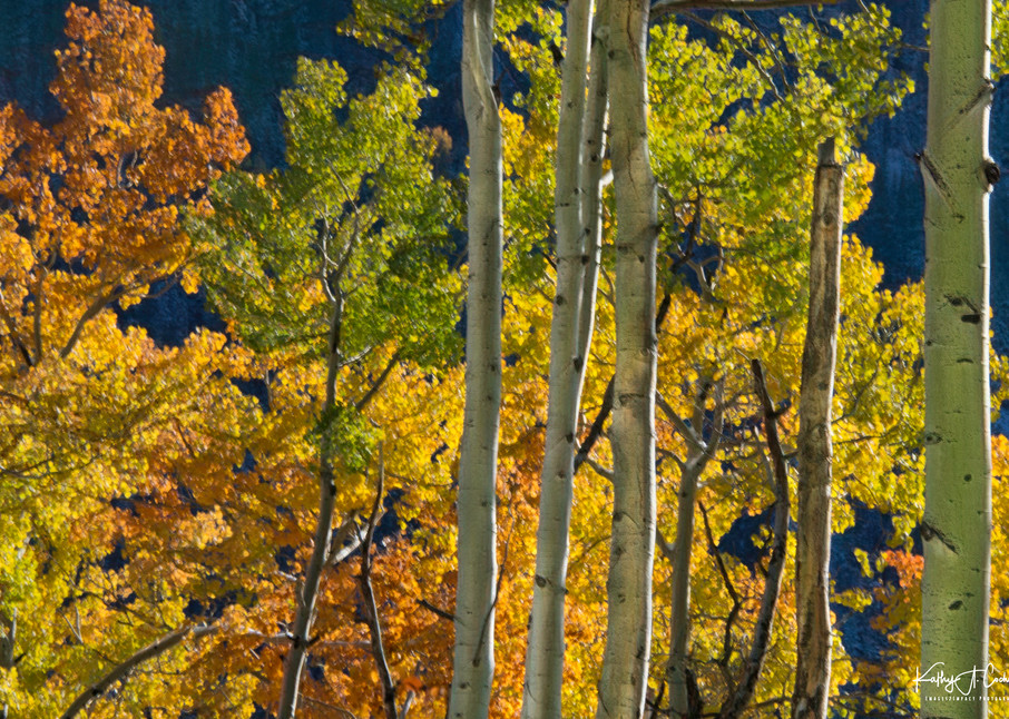 Fire Of Aspens Photography Art   Images2Impact