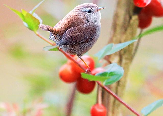 Garden Birds 07 Photography Art | Cheng Yan Studio