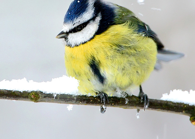 Garden Birds 11 Photography Art | Cheng Yan Studio