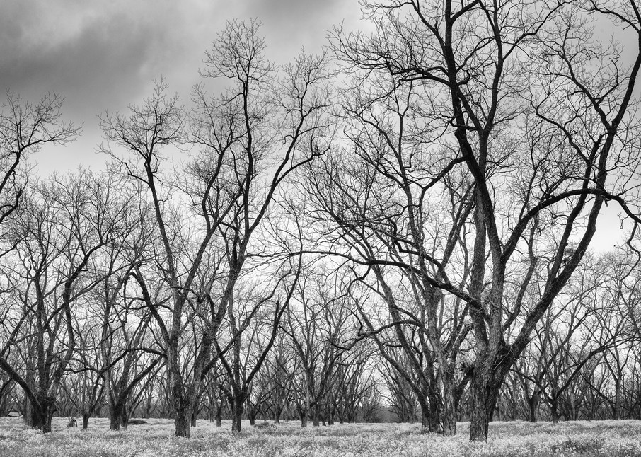 Trees  46 Photography Art | Sandy Adams Outdoorvizions Photography