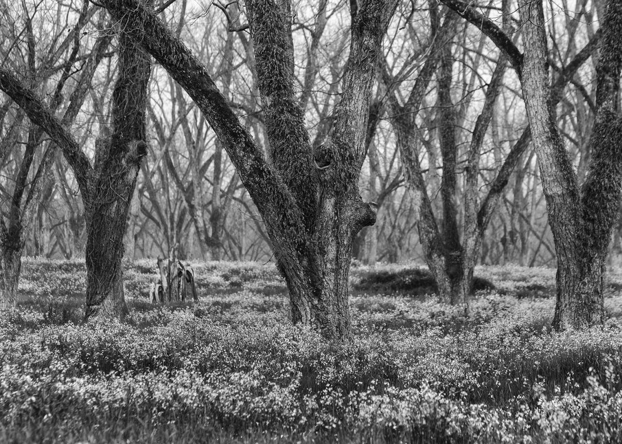 Trees  50 Photography Art   Sandy Adams Outdoorvizions Photography