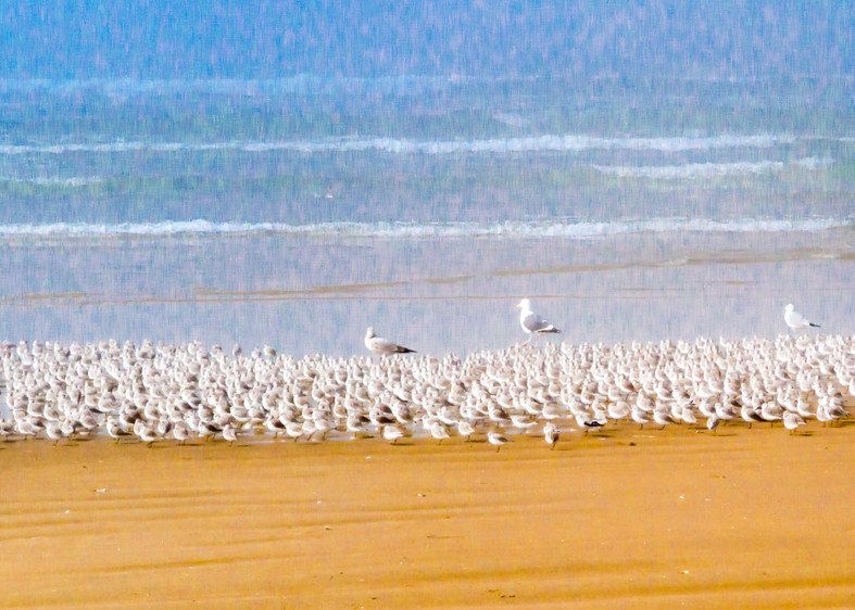 Steve Woodford, beach, photo, Sandpiper Parade, bird. surf