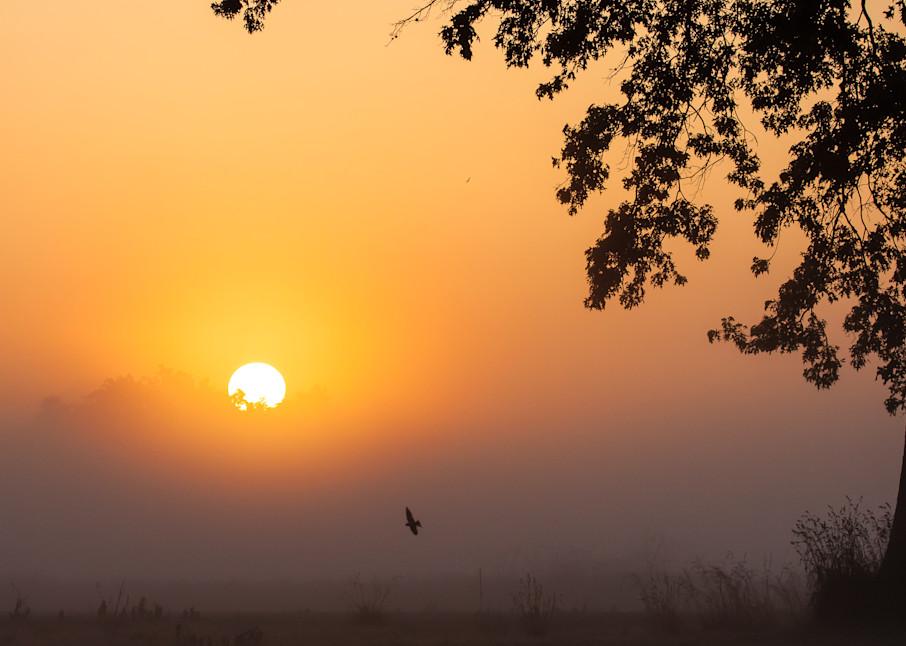 Steve Woodford, sunset, photo, Morning Red Tail, bird