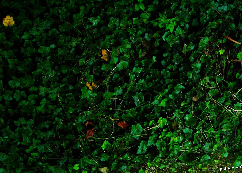 Ivy Tapestry Greens Print