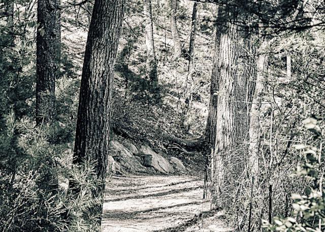 Walden Woods Art | Peter J Schnabel Photography LLC