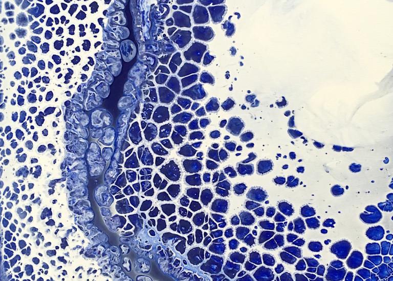 Bone Structure Art | PMS Artwork