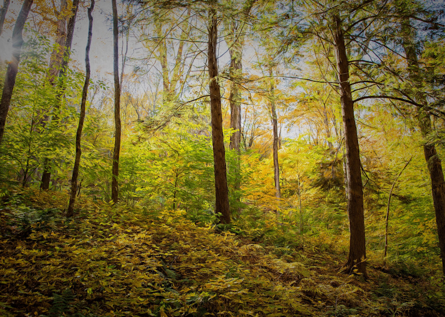 The Light In The Woods Photography Art | Peter J Schnabel Photography LLC
