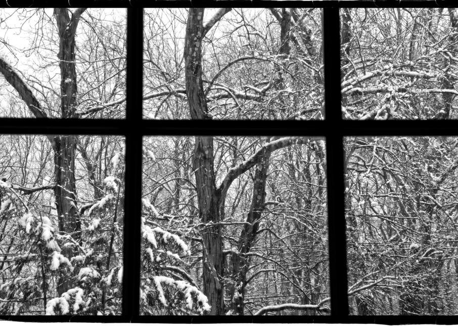 Winter Under Glass Photography Art | David Frank Photography