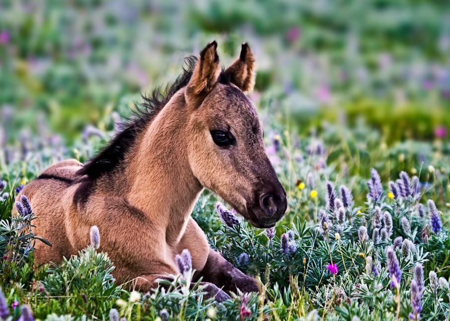 Pryor Mountain Wild Horse Art | Third Shutter from the Sun Photography