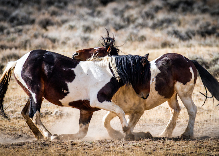 Dual In Wyoming Art | Third Shutter from the Sun Photography