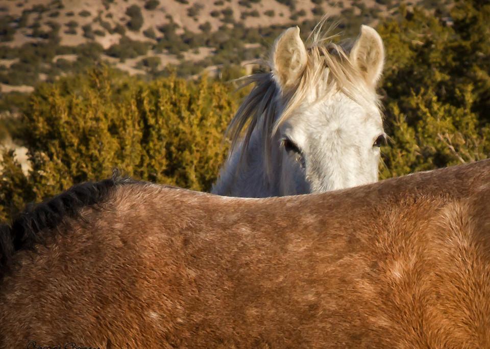 Wild Horse Peek A Boo Art | Third Shutter from the Sun Photography