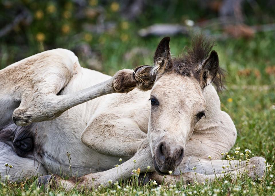Little Scratch   Wild Foal Art | Third Shutter from the Sun Photography